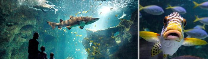 Tourisme Charente Maritime - Aquarium de la Rochelle - Hôtel & spa du château